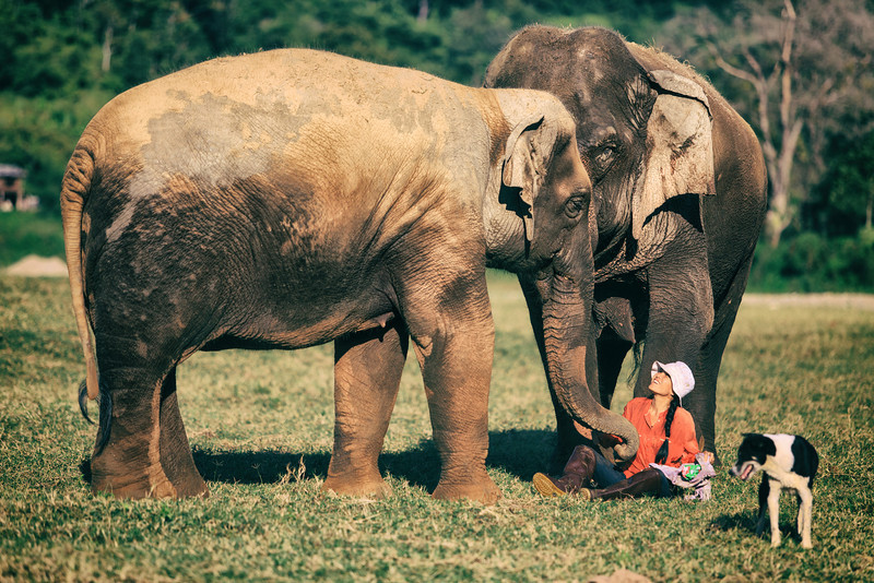 National Elephant Day! - Elephant Nature Park, Chiang Mai, Thailand