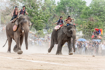 Racing Elephants, Buon Don, Central Vietnam