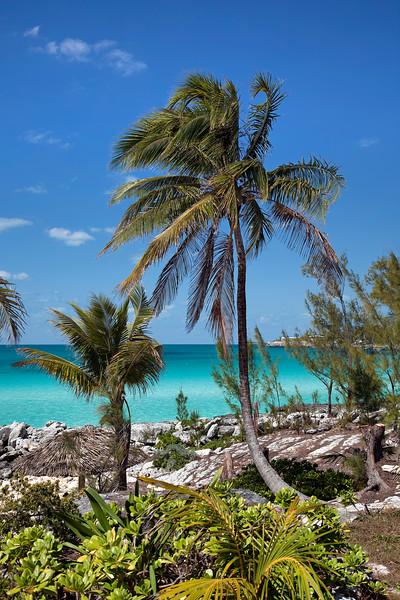 Palm Trees at Rainbow Beach