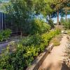DSC_1297_garden