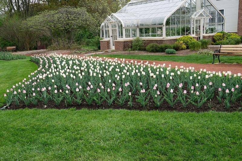 Tulip Gardens_May 6, 2015