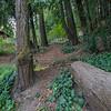 DSC_7570_redwood