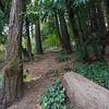 DSC_7568_redwoods