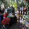 Eliaabethan Gardens Harvest Hayday