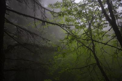 Elk Mountain Chilliwack BC by Kris Houweling