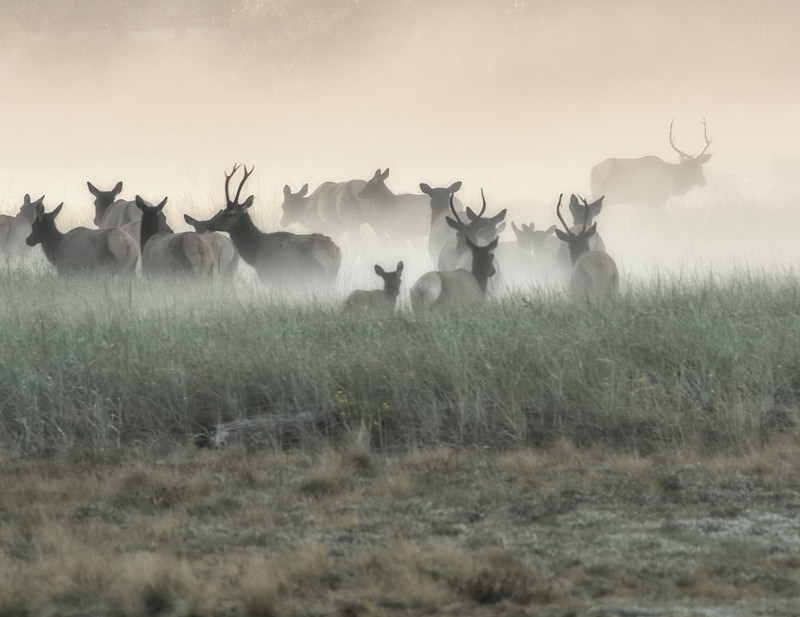 Foggy Bottom Elk