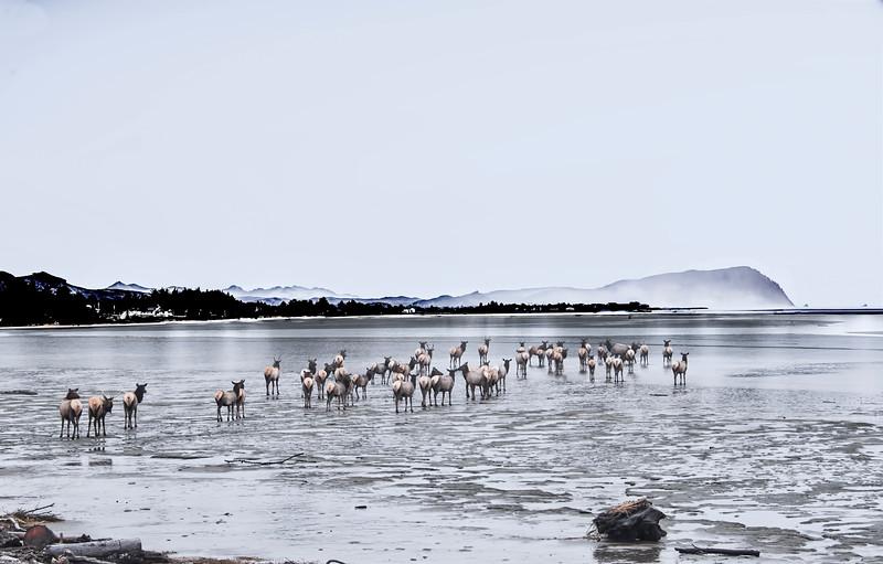 EstuaryElkSouthernPanorama