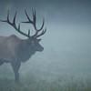 In Morning Mist