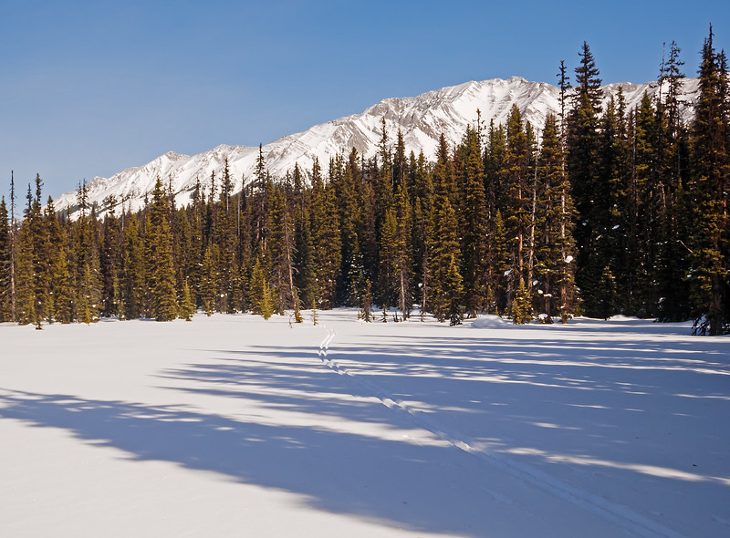 Continuing south from the extensive West Elk pass meadow, the route meanders through  smaller meadows, and short treed sections. Trailbreaking on 55mm light touring skis was easy, with 10-12 cm ski penetration.