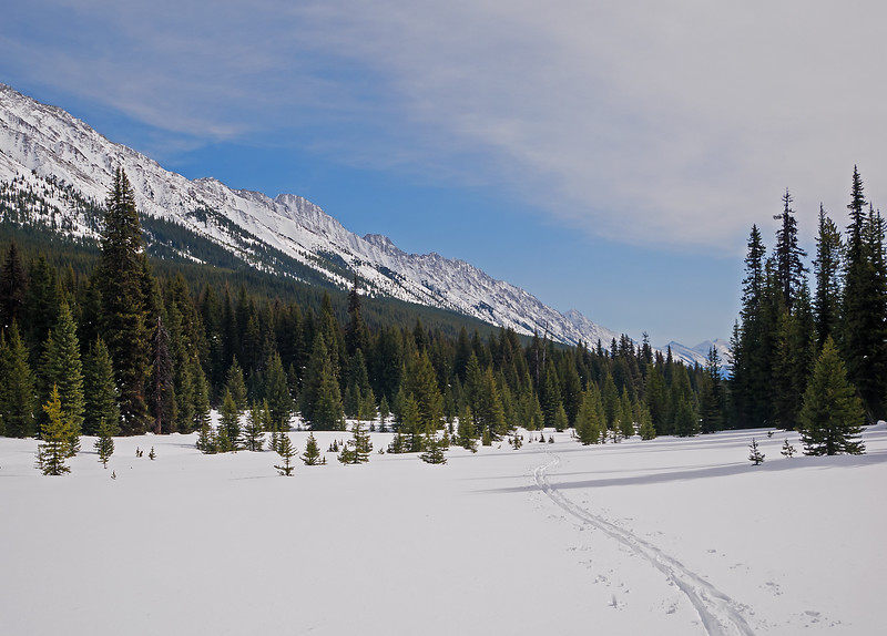 Return track from the gentle meadow descent further into BC from the pass.