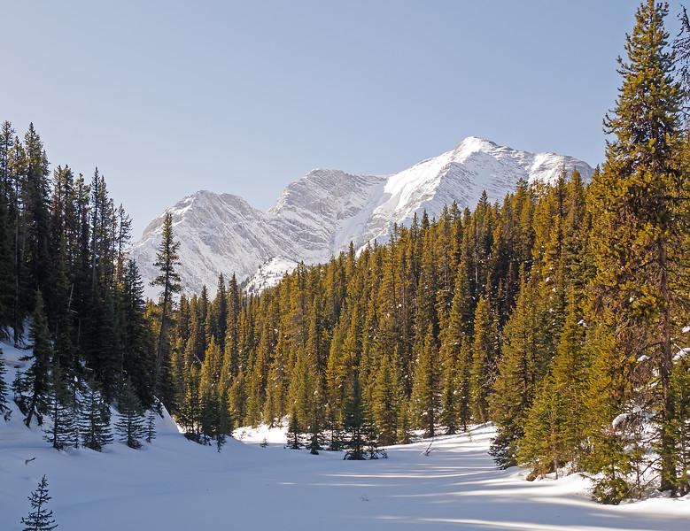 Upper Fox Creek along the Elk Pass ski trail.