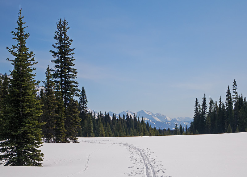 Arriving at East Elk Pass after descending 700m on Tywhitt ski trail, then following the skiers ahead of me on a winding meadow and forest route along upper Boulton Creek from Alberta back into BC again.