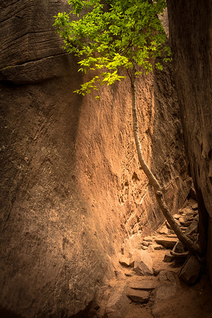 Zion National Park, Utah 2015