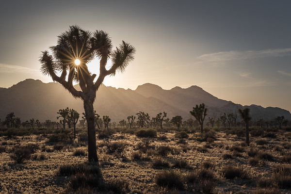 Joshua Tree National Park, California 2016