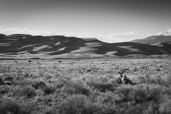 Great Sand Dunes National Park, Colorado 2015