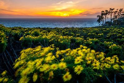 MALIBU SPRING SUNSET