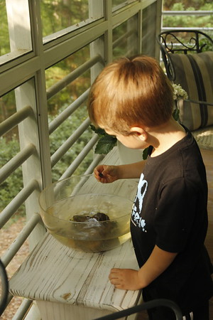 tadpoles (and frogs) caught at the Eno River