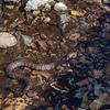 More water snake shenanigans.