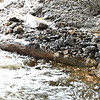 Possibly unrelated large log under the bridge.