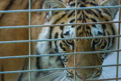 Elmvale Zoo