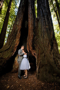 9596-d700_Katrina_and_Barry_Henry_Cowell_Redwoods_Felton_Wedding_Photography