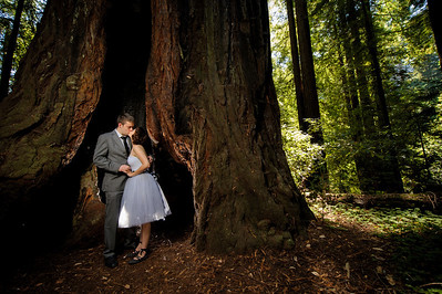 9602-d700_Katrina_and_Barry_Henry_Cowell_Redwoods_Felton_Wedding_Photography