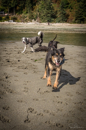 Double Bluff Dog Park, Whidbey Island, Washington