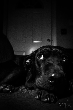 Elsie Noir