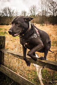 Elsie jumps!