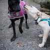 Elsie & pup