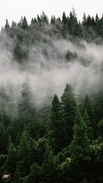 Foggy-Forrest