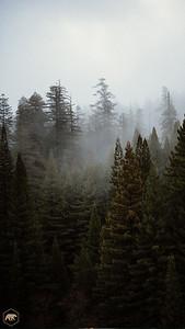 Treeline-1
