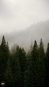 Treeline-2