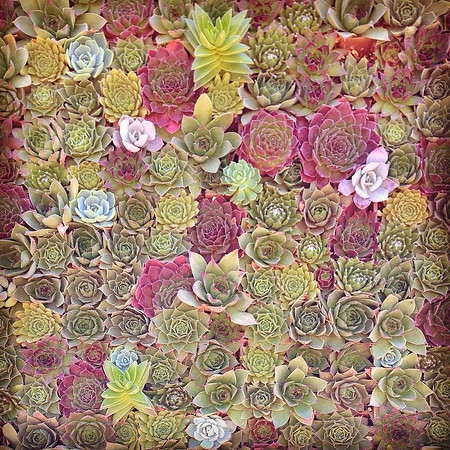 A living wall at the Sunset Magazine Headquarters - Sunset Celebration Weekend 2014