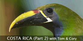 Costa Rica: Birding the Edges birding tour with FIELD GUIDES