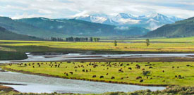 Montana with FIELD GUIDES BIRDING TOURS