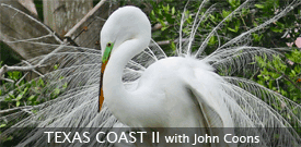Texas Coast birding tour with FIELD GUIDES