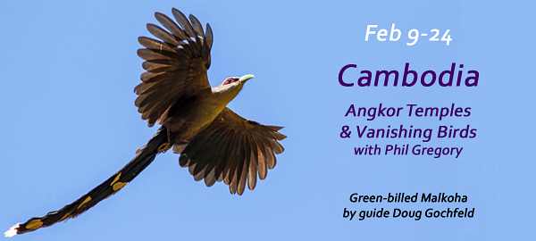 CAMBODIA with FIELD GUIDES BIRDING TOURS