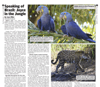 Article on FIELD GUIDES Jaguar Spotting tour to Brazil