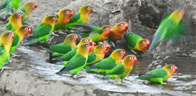 Kenya & Tanzania with FIELD GUIDES BIRDING TOURS