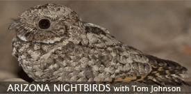 Arizona Nightbirds tour with FIELD GUIDES