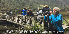 Jewels of Ecuador I with FIELD GUIDES BIRDING TOURS