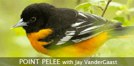 Point Pelee birding tour with FIELD GUIDES
