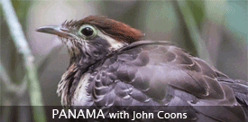 Panama's Canopy Tower and Lodge with FIELD GUIDES BIRDING TOURS