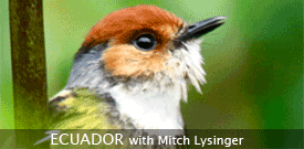 Ecuador birding tour with FIELD GUIDES