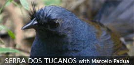 Serra dos Tucanos, Brazil birding tour with FIELD GUIDES