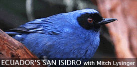 Field Guides Birding Tour to SAN ISIDRO in ECUADOR