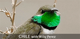 Field Guides Birding Tour to CHILE