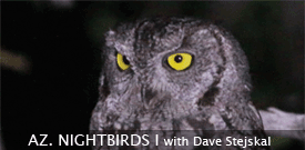 Arizona Nightbirds birding tour with FIELD GUIDES