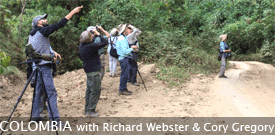 Colombia: Santa Marta Escape with FIELD GUIDES BIRDING TOURS